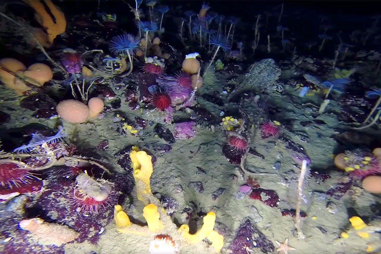 много подводный мир антарктиды фото что фронтальной камеры